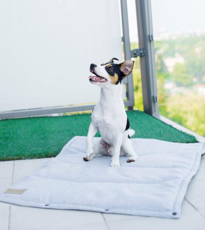 tapis chien grey bowl and bone
