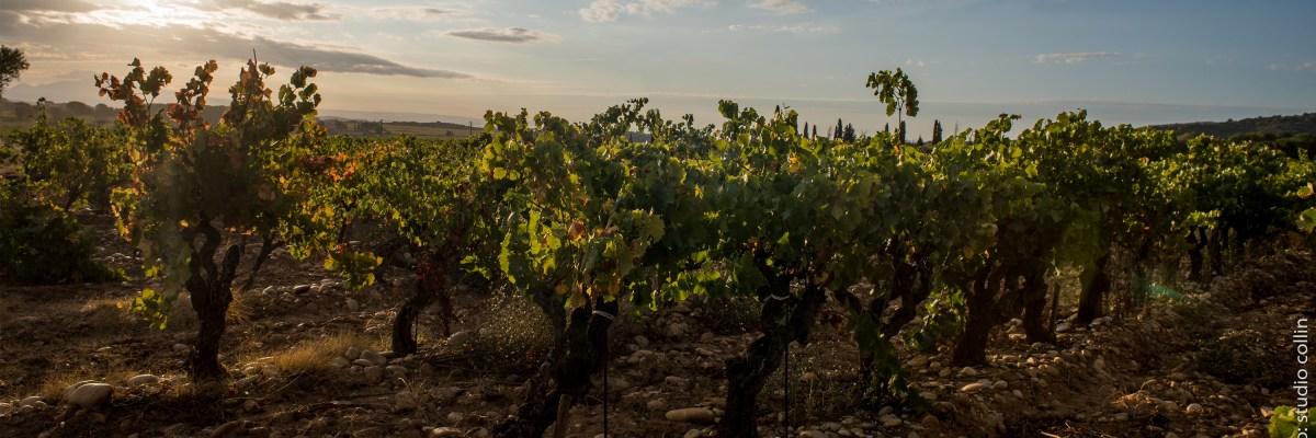 côtes du rhône vin maison rivier chusclan laudun