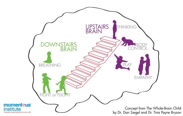 Upstairs-Downstairs-Brain