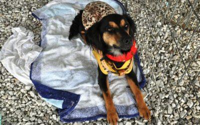 Em fevereiro tem Feira de Adoção de Cães e Gatos em Pinhais