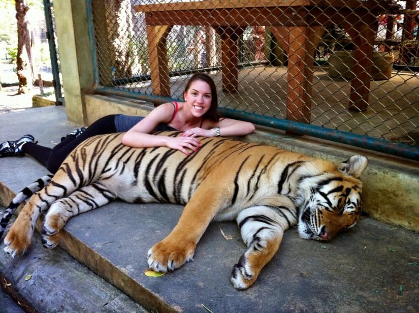 Tigre provavelmente dopado, zoológico de tigres na Tailândia