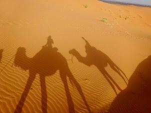 Passeio de camelo no deserto, deserto do Marrocos