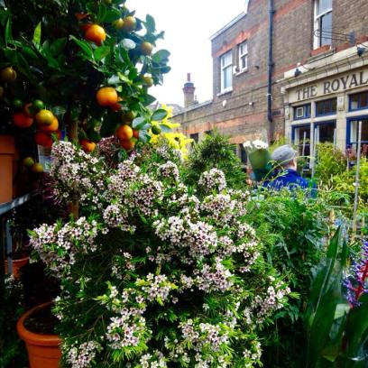 Plantas, mercado de flores em Londres