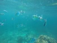 Fish underwater in Maya Bay, Thailand