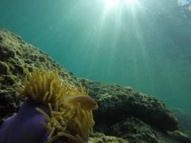 marine animals in Maya Bay