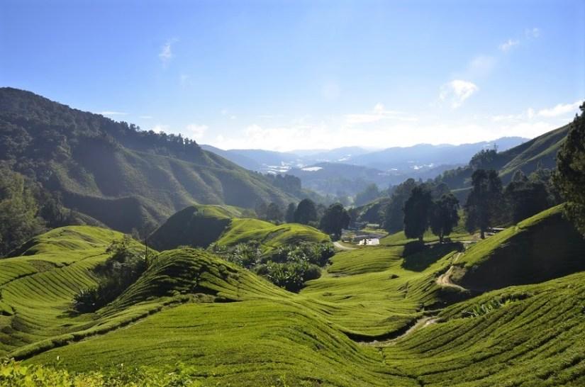 Cameron Highlands Valley