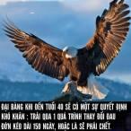 daibang40