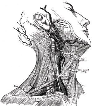 Gray's Anatomy | Sarah L Wilson