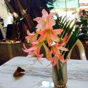 frites corner flowers for lunch