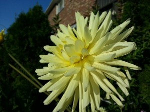 Fleur à ISO 100