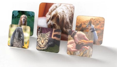 HD Hardboard Photo Panels