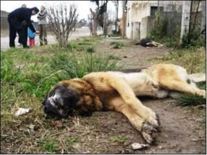 envenenado-perro