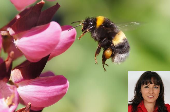 "Acusan al Hospital Puerta de Hierro Majadahonda de ""fumigar las abejas"" que liban el romero"