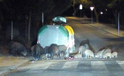 La población de Majadahonda será alertada de los jabalíes y zorros que rondan el Monte del Pilar