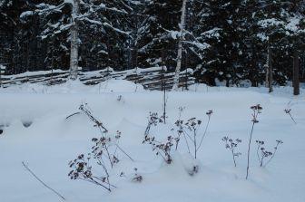 januar 2014 sne1