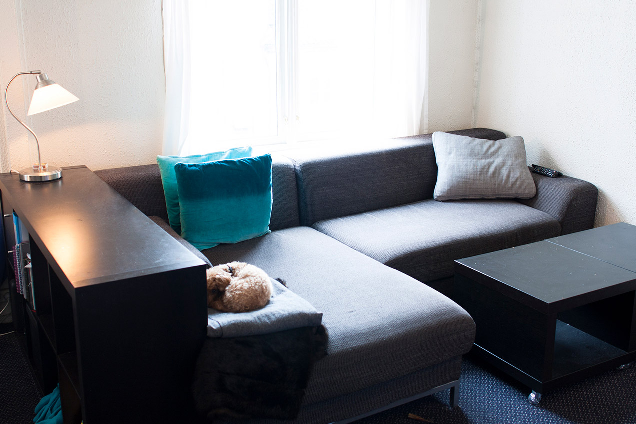 Small poodle sleeping on a gray couch in a tidy living room