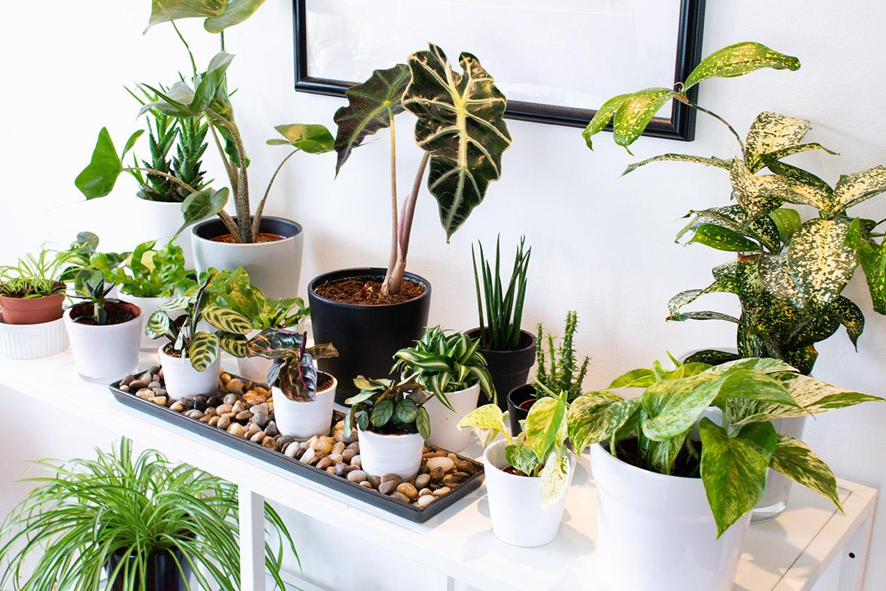 Plant shelfie: varius green plants on a white shelf
