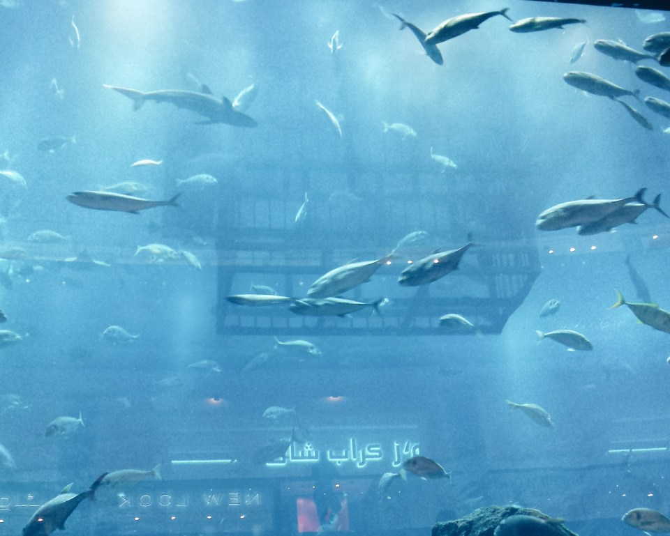 Things to see in Dubai, dubai mall aquarium