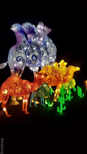 camels at magical lantern festival on www.majeang.com