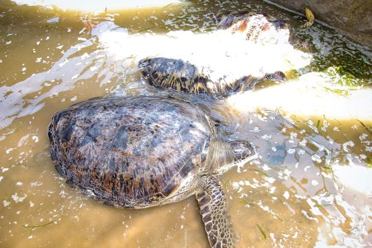 important things to remember when booking accommodation- Turtle beach, Bali