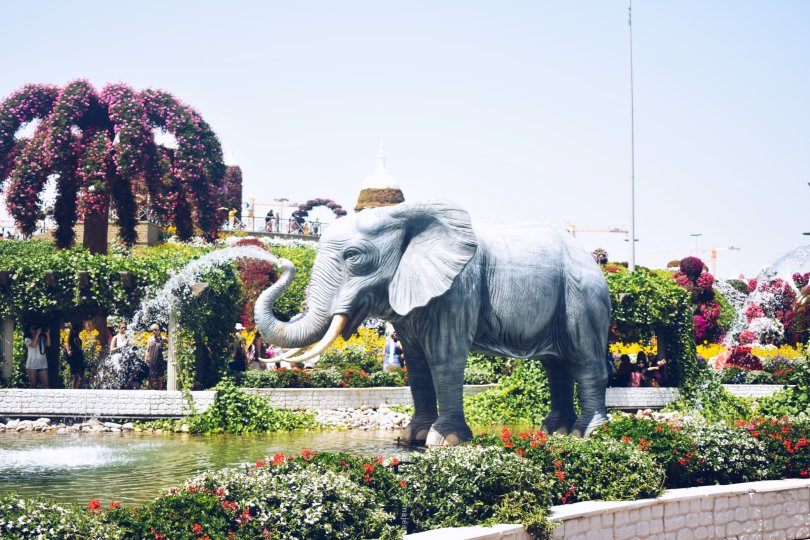 5 Places Worth Seeing in Dubai-dubai miracle gardens elephant