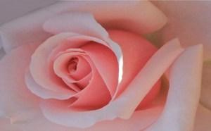 花のように、ただ在るだけで美しい。