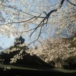 花換え祭り敦賀市2017!駐車場案内&佐藤和哉さん出演決定!