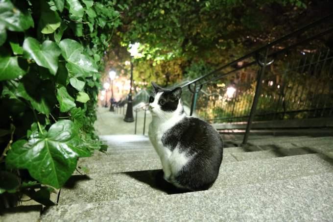 Combien d'espèces animales se côtoient à Paris ?