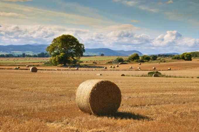 Quelle baisse pour le revenus des agriculteurs français en 2016 ?