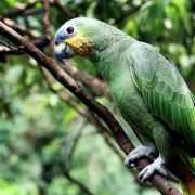 L'enjeu environnemental en Amérique latine en 10 bullet points