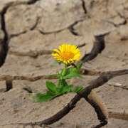 Économie – Effet papillon : les maladies du passé à l'origine des écarts de développement présents