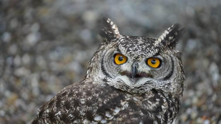 Selon l'UICN, parmi toutes les espèces répertoriées, quel est le pourcentage menacé d'extinction ?