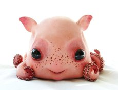 baby_dumbo_octopus_by_santani-d3cq01c