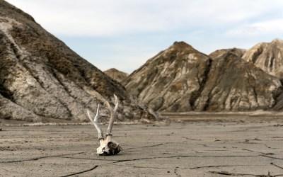 Navigating Change's Death Valley