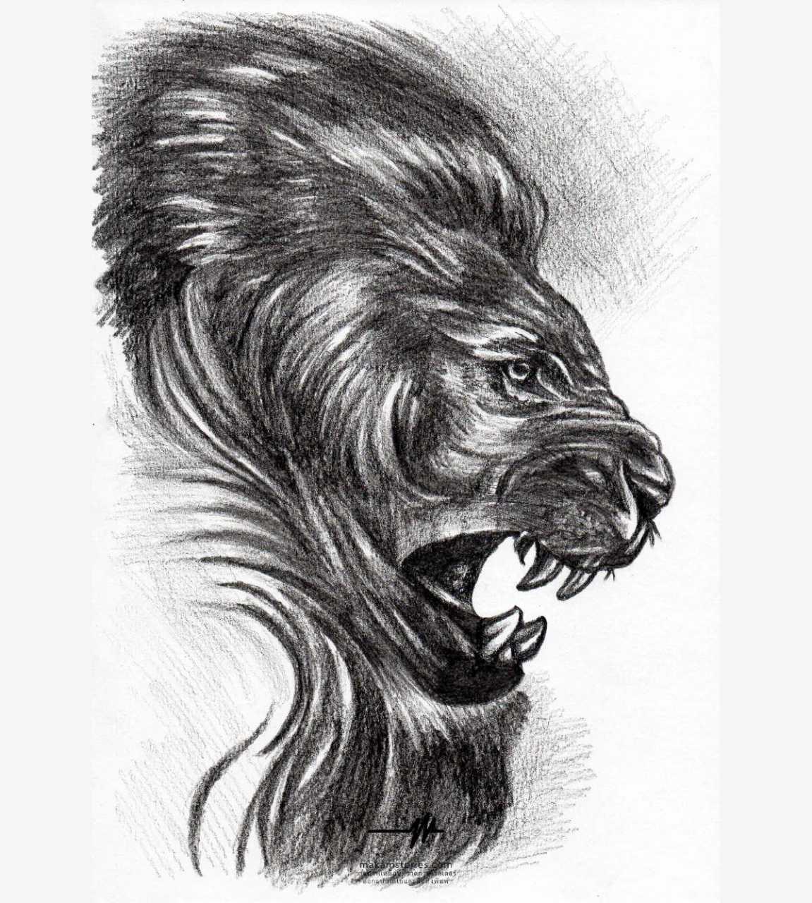 ภาพวาดลายเส้น ภาพวาดดรออิ้งหัวสิงโต สำหรับนำไปเป็นแบบลายสัก