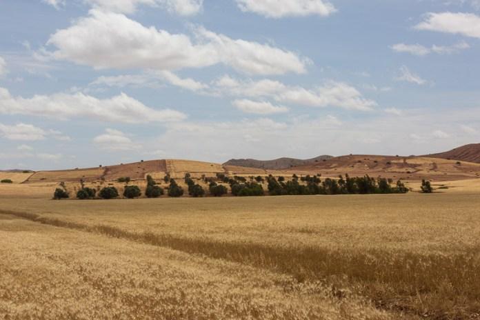 Die Kornkammer Marokkos.