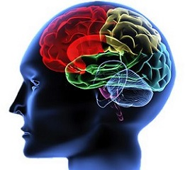 functional-neurology-exercises