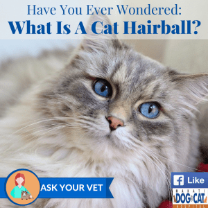 Have You Ever Wondered: What Is Cat Hairball?