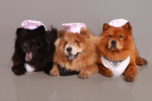 Dave, Andi, and Tanner: Chow chow