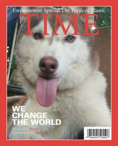 Sandy: Siberian Husky