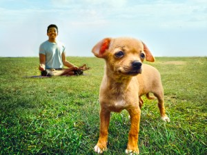 Snuff: Chihuahua