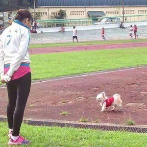 Yoorie: Mix. Shihtzu Chihuahua