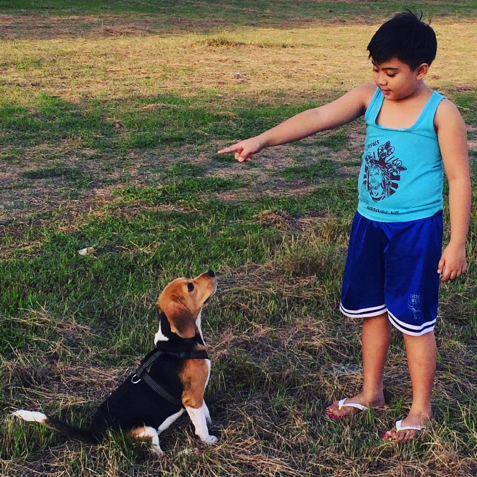 Playmate Collection's Golem: Beagle