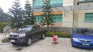Peepay, Kalayaan & Gotchie: Toy Poodles
