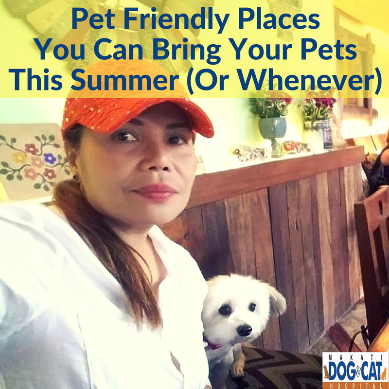 Pet Friendly Places You Can Bring Your Pets This Summer (Or Whenever)