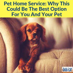 Pet Home Service: Why This Could Be The Best Option For You And Your Pet