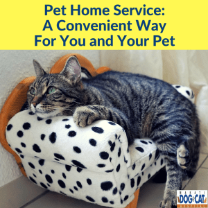 Pet Home Service: A Convenient Way For You and Your Pet