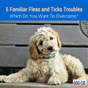 5 Familiar Fleas and Ticks Troubles – Which Do You Want To Overcome?