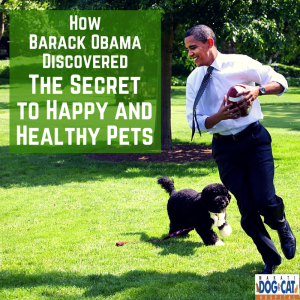 How Barack Obama Discovered The Secret to Happy and Healthy Pets (Hint: Pet Home Service)