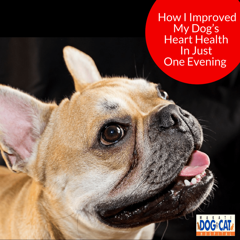 How I Improved My Dog's Heart Health In Just One Evening: A Proheart Heartworm Prevention Success Story